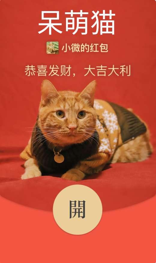 【红包封面】呆萌猫咪